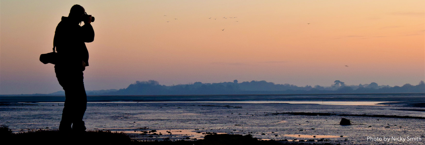 Pagham Harbour bird Photography