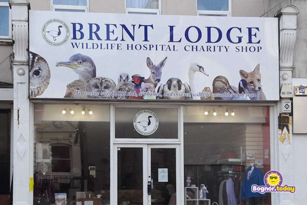 Brent Lodge Charity Shop