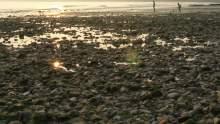 Fossil Hunting Bognor Regis